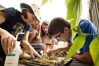 Students look at a collection of plants on a tray.