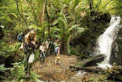 A group of students hiking in a rainforest while looking at a waterfall.