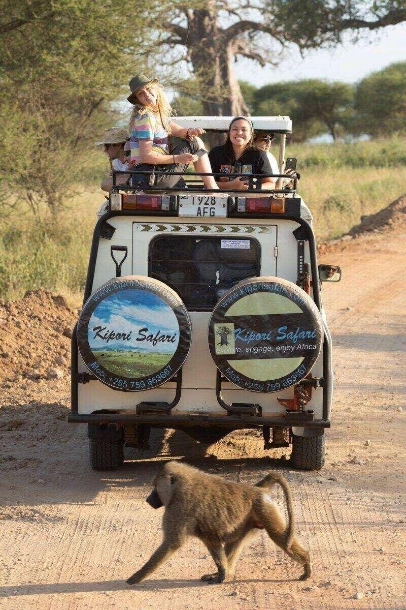 Liber arts students sit atop a van in the Tanzanian savann while a baboon crosses the road.