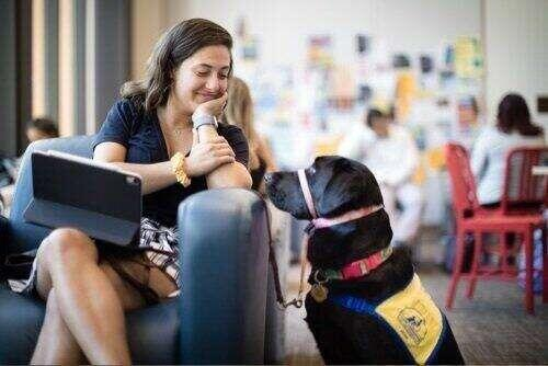 Marissa Cobuzio '19 seated smiling at her suport dog.